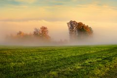 Arbres en automne en brouillard Images libres de droits
