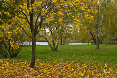 Arbres en automne en parc images libres de droits