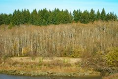 Arbres en Autumn Along Mud Bay, Puget Sound, Olympia, Washington photographie stock