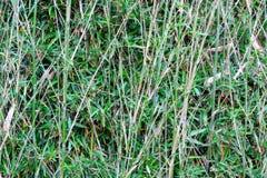 Arbres en bambou Photo libre de droits