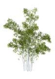 arbres en bambou du rendu 3D sur le blanc Photo libre de droits