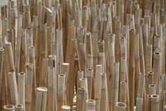 Arbres en bambou normaux Photos libres de droits