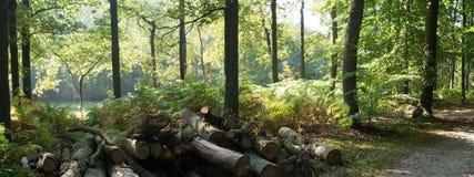 Arbres en bois Images stock