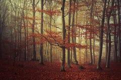 Arbres en bois mystiques pendant l'automne Photo stock