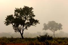 Arbres en brouillard Images libres de droits