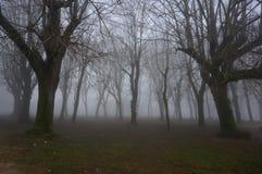 Arbres en brouillard Photographie stock