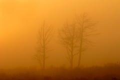 Arbres en brouillard Photographie stock libre de droits