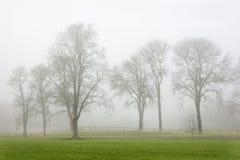 Arbres en brouillard Images stock