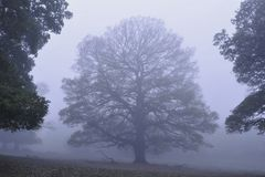 Arbres en brouillard Richmond Park London photo stock