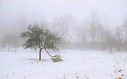 Arbres en brume Photographie stock