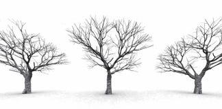Arbres en brume brumeuse Image stock