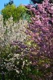 Arbres en fleur images stock