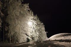 Arbres en hiver Photographie stock