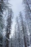 Arbres en hiver Photographie stock libre de droits
