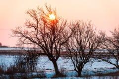 Arbres en hiver Photos libres de droits