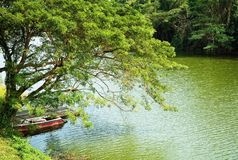 Arbres en la rivière et le bateau Images libres de droits