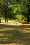 Arbres en parc au coucher du soleil Photographie stock