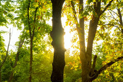 Arbres en parc au coucher du soleil Image stock
