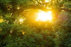 Arbres en parc au coucher du soleil Photographie stock libre de droits