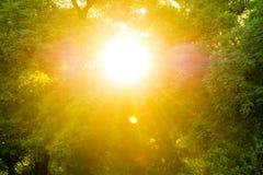 Arbres en parc au coucher du soleil Images libres de droits