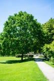 Arbres en parc avec le chemin Photo libre de droits
