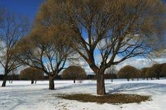 Arbres en parc d'hiver Image stock