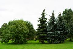 Arbres en parc dans la ville Photo stock