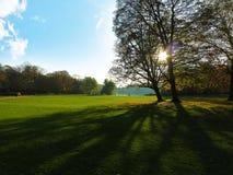 Arbres en parc dans le jour de contre Photo stock