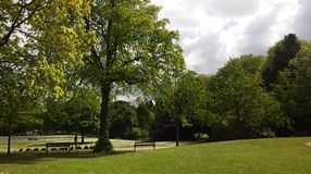 Arbres en parc de Buxton, R-U photographie stock
