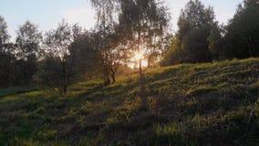 Arbres en parc le soir Lumi?re du soleil par les cimes d'arbre, clips vidéos