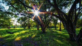 Arbres en parc Les rayons du soleil par des arbres Photographie stock libre de droits