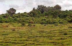 Arbres en parc naturel Photographie stock libre de droits