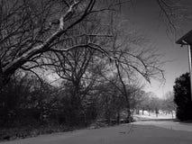 Arbres en poudre par neige images stock