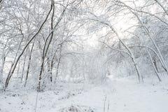 Arbres en stationnement de l'hiver Photos stock