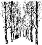 Arbres en stationnement de l'hiver Images libres de droits