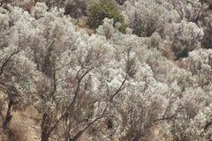Arbres en vallée d'Amari crète La Grèce Photo stock