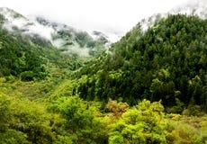 Arbres en vallée de Jiuzhaigou, Sichuan, Chine Images libres de droits