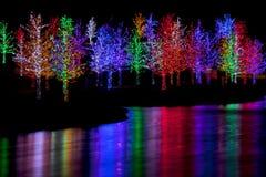 Arbres enveloppés dans des lumières de LED pour Noël Image stock