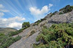 Arbres et arbustes à feuilles persistantes sur un flanc de coteau rocheux raide en Crimée Photos stock