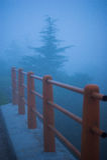 Arbres et barrière brumeux de nature Image stock