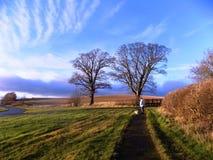 Arbres et barrière, dans le Northumberland du nord, l'Angleterre LE R-U photos stock