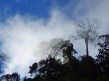 Arbres et brouillard Photos stock