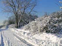 arbres et buissons couverts de neige photographie stock