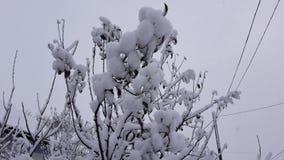 Arbres et buissons d'hiver fortement répandus avec la neige profonde Hiver russe givré de neige photos stock
