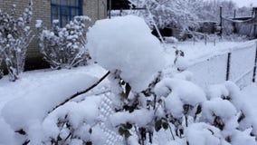 Arbres et buissons d'hiver fortement répandus avec la neige profonde Hiver russe givré de neige photo libre de droits