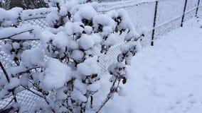 Arbres et buissons d'hiver fortement répandus avec la neige profonde Hiver russe givré de neige image stock