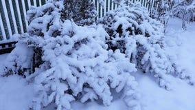 Arbres et buissons d'hiver fortement répandus avec la neige profonde Hiver russe givré de neige photographie stock libre de droits