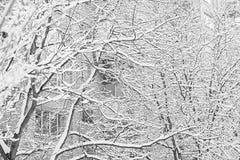 Arbres et buissons dans la neige Photographie stock libre de droits