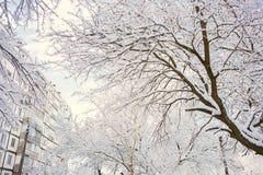 Arbres et buissons dans la neige Photos stock