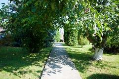 Arbres et buissons de plantes vertes un été chaud Image stock